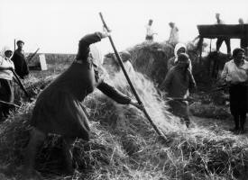 Peasant working in a Jewish Kolkhoz, 1930