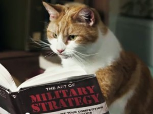 A cat studying military strategy.