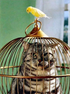 Cat in a cage with a bird looking in.
